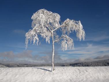 Nejlepší lyžování na Lipně? Jedině na Hochfichtu a s našimi zvýhodněnými lyžařskými balíčky