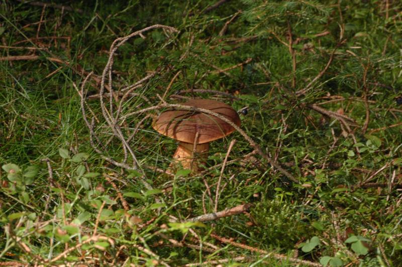 Bohatství šumavských lesů - Penzion Eliška