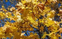 Podzimní dovolená na Lipně