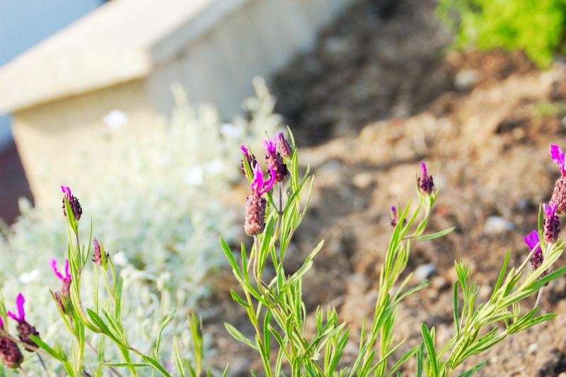 Vlastní zahrádka penzionu, kde pěstujeme bylinky