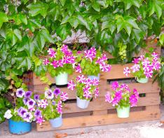 Zahrada penzionu Lipno